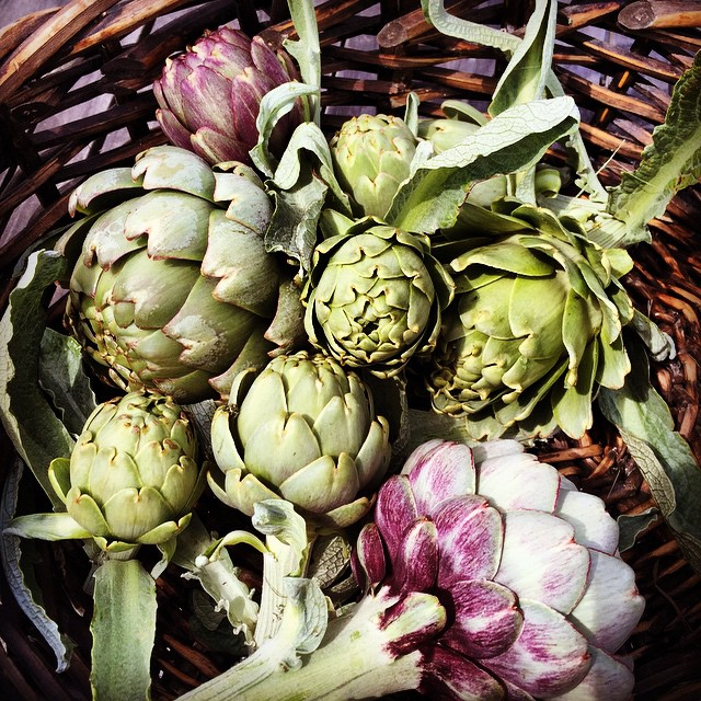 #Artichoke diversity. The plants that bore these artichokes all originally came from the same seed, but there is so much difference in the final bulbs. #FoodFarm