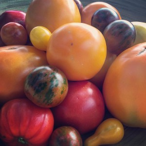 A congregation of the United Nations of Tomatoes on TheFoodFarmhellip