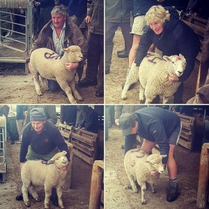 North Canterbury farmers and their best spring lambs Its onhellip
