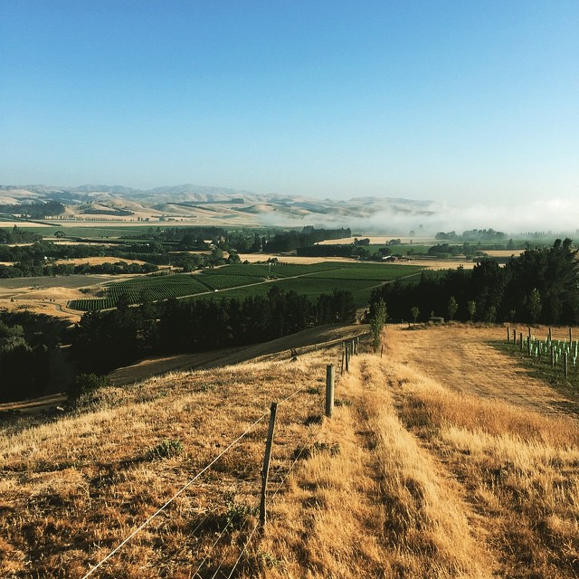 Two tone country. It's either green or its brown. #NorthCanterbury View up the #WaiparaValley from the #Greystone Vineyard. #NZWine