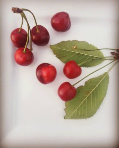 Finally finally the home grown Stella cherries are ready