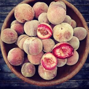 Blackboy Peach season Also known as Pche de Vigne orhellip