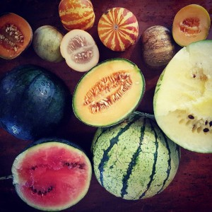 TheFoodFarm melons for this season Clockwise from stripey top Tiggerhellip