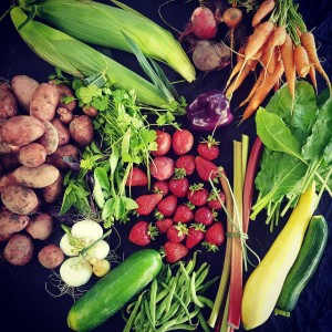 This weeks CSA share on TheFoodFarm Week 10 and thehellip