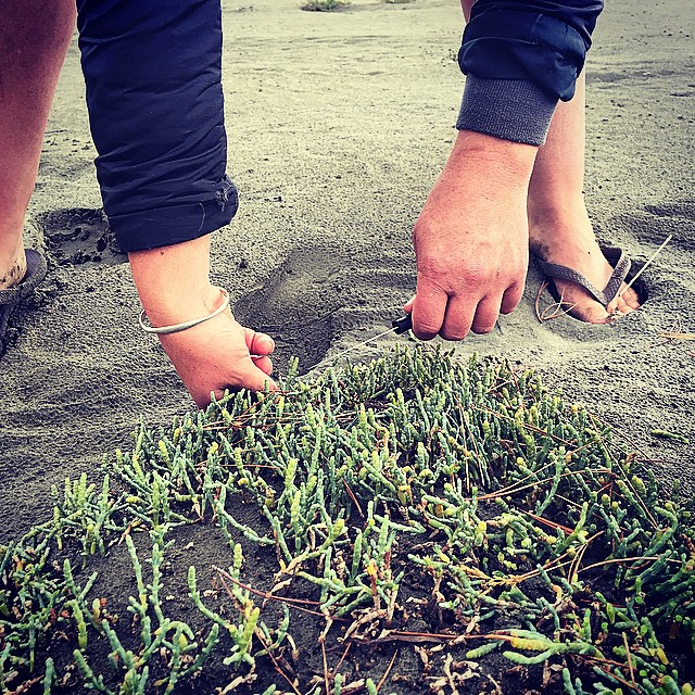 Short but sweet. #Samphire picking at Okains Bay on the weekend. Delicious stuff. #Forage #WildFood #BanksPeninsula #WildFoodLove #NZ