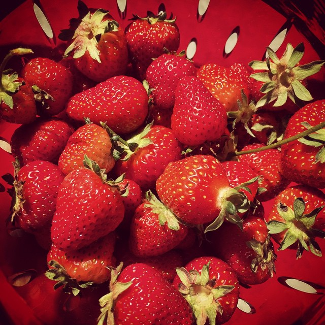 The first significant pick of #FoodFarm #strawberries this morning. The children are already making plans for chocolate fondue!