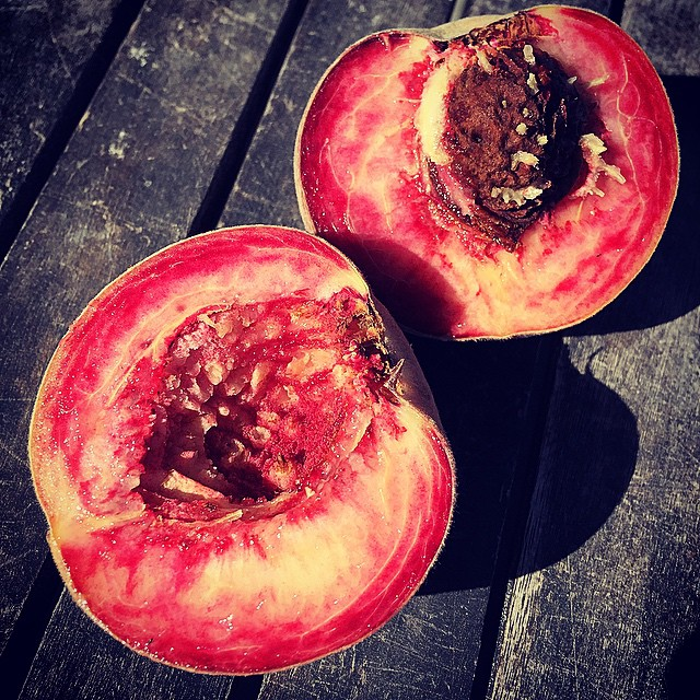 The truly special Black Boy peach. Legendary status in New Zealand. A red fleshed peach originally cultivated in France and given the name 'Peche de Vigne'. Interestingly this translates to The 'Vineyard Peach' & a suggestion is 'twas planted alongside vines as an indicator of pests & diseases. I'm not so sure. Have noted for the last 5 years that this beauty ripens within a week of harvest here. So maybe more of an indicator to get ready, set & go! #FoodFarm #Vintage15 #NZWine