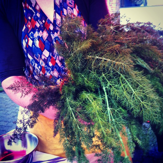 Kate's wild fennel. #NorthCanterbury #Foraging #WildFood