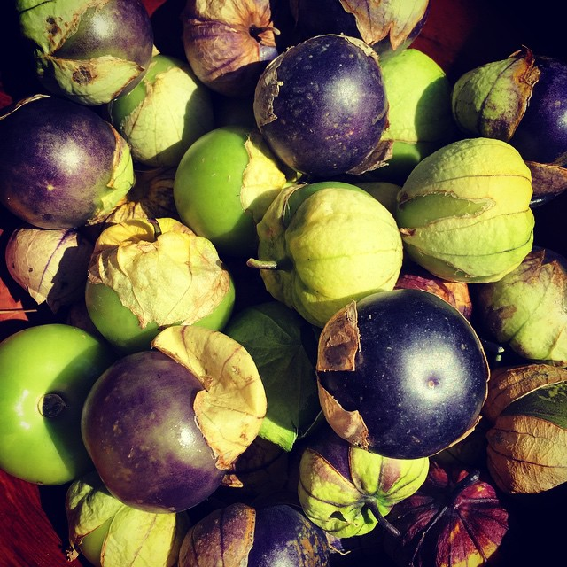 This is the first time I've grown purple tomatillos. I think they're beautiful alongside the green ones. The flavour difference is the same as the difference between a red apple & a green apple. Think I prefer the purple ones! #FoodFarm
