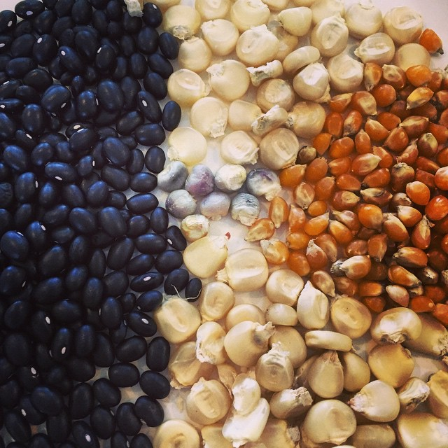 Some new seeds for us this year: top is white maize, next popping corn, bottom Kaanga Ma (NZ type of white maize), Black Garcia black beans and mauve maize in the centre. Better get them in the ground! #FoodFarm #SummerisComing