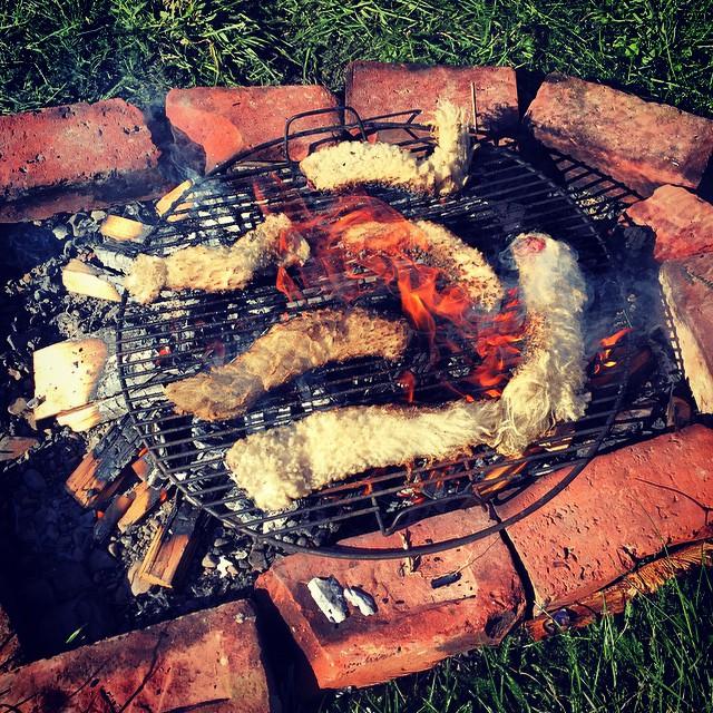 Lambs Tails. #KiwiDelicacy #KiwiAs #NZFood #OhYeah #FoodFarm