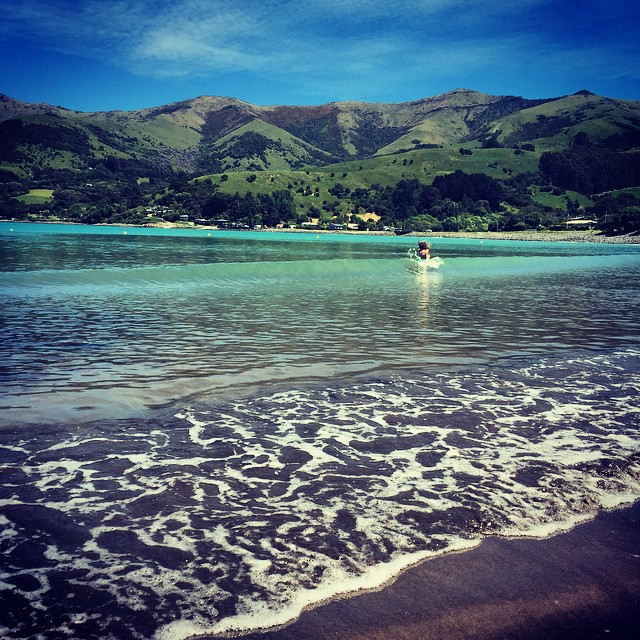 Seaweed collecting at Wainui. To be fair, not much seaweed collected yet. ?#NZ #Canterbury #BanksPeninsula