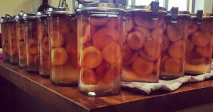 Jars (not cans) of apricots!
