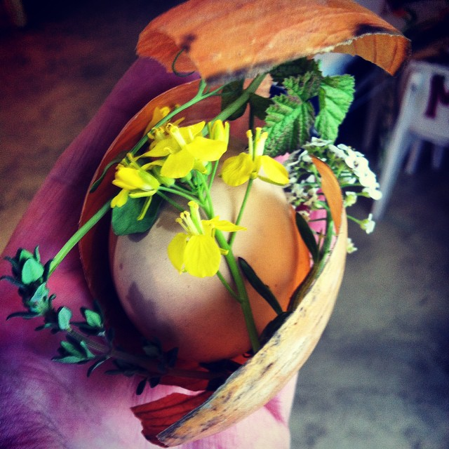 Celebrating #SpringEquinox with an #egg celebration tonight on the #FoodFarm. This is a Latvian/European tradition of collecting spring flowers, feathers, rice etc & wrapping them in onion skin before boiling them in water coloured with beetroot, walnuts, nettles and so on.