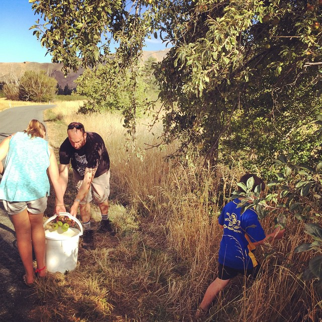 A quick family #forage for wild apples this afternoon. It seems we are competing with everything this season -birds, wandering stock, drought conditions.