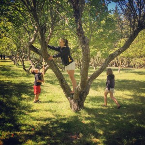My children picking apricots.