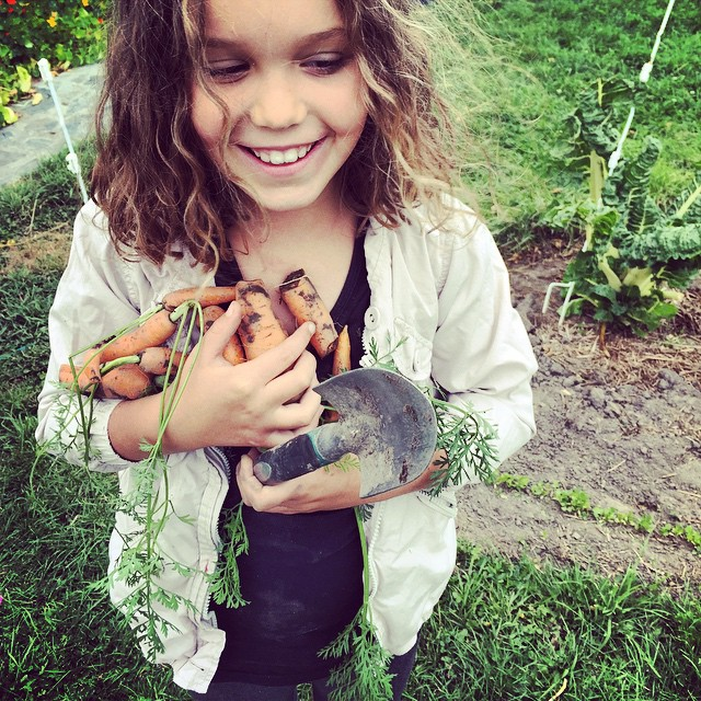 Small child carrot pulling. The best kind of carrots. #FoodFarm