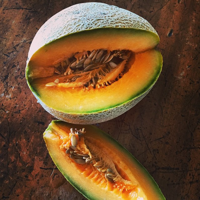 The first rockmelon. Delicious warm, straight from the garden. Quite proud as they're not that easy to grow here. Think I might finally have worked out the secret! #FoodFarm
