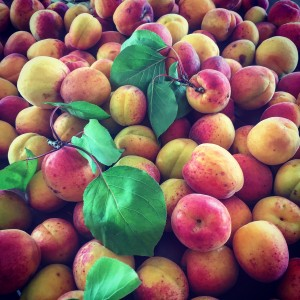 Foraged Apricots