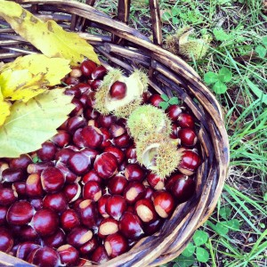 Wild Chestnuts