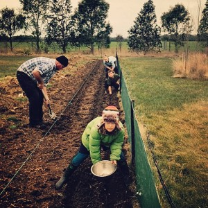 Planting garlic & broad beans in early winter on The Food Farm.