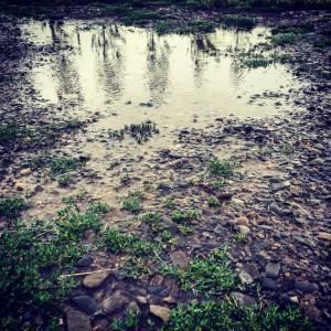 Rain puddles on The Food Farm